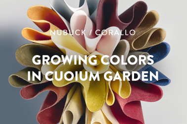 growing colors in cuoium garden