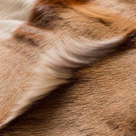 Springbuk - Pelli esotiche
