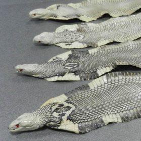 Cobra - Pelli esotiche