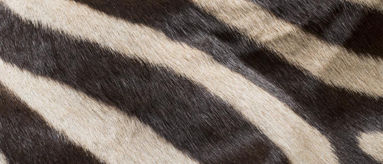 zebra-naturale-header