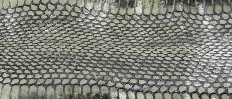 cobra-header