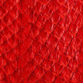 Arapaima Telo - Rosso Lucido