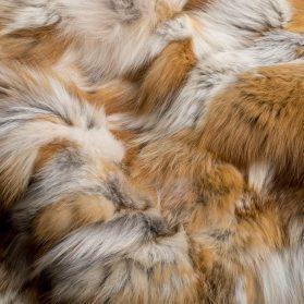 Telo Volpe Rossa / Tile Red Fox